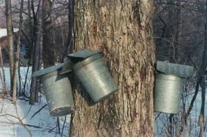 vermont-maple-sugaring-season-1